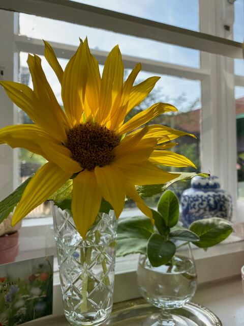 Sonnenblume-Kinderwunsch-ungewollt kinderlos-Ferber-Beratung-Psychologische Hilfe-Kindersehnsucht