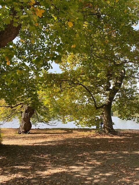 Bäume-Herbst-See-Kinderwunsch-Erfahrungsbericht-Hilfe-Beratung-Tipps-was tun-Coaching-Ferber-Franziska-Kindersehnsucht